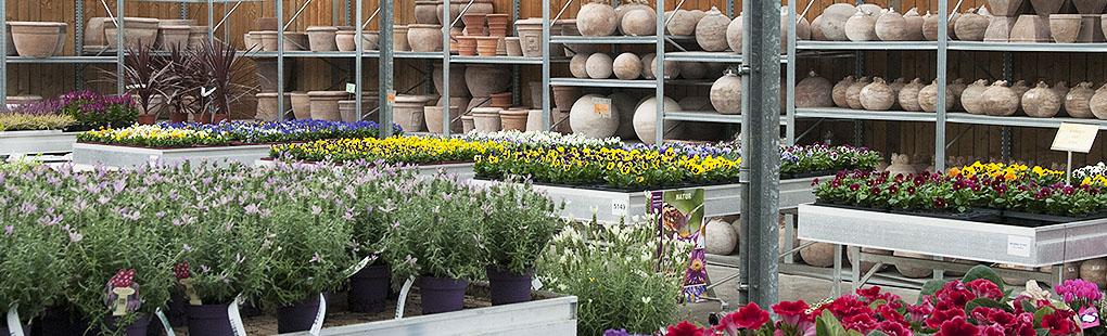 Tuinbenodigdheden gardenforum tongeren - Decoratie jardin terras ...
